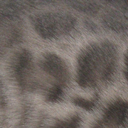 Blue bengal pattern