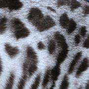 Silver bengal pattern